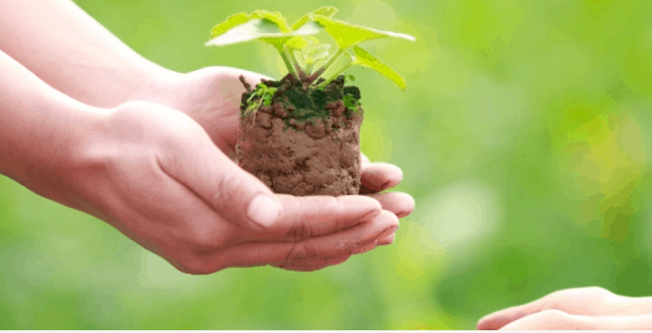 Two hands holding a small plant that is growing.